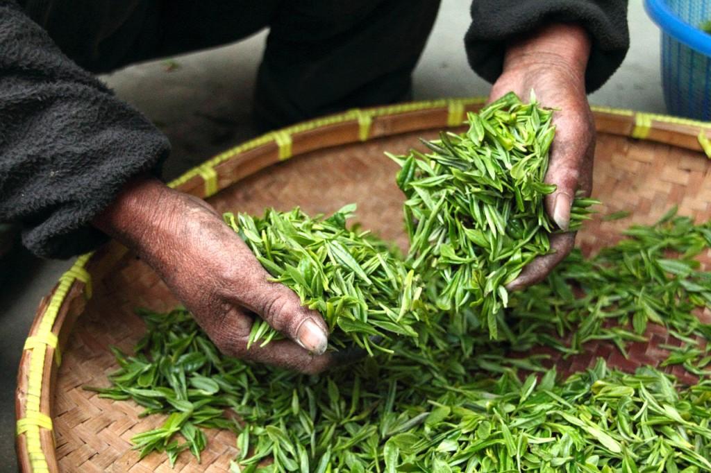herbata skrzyp polny